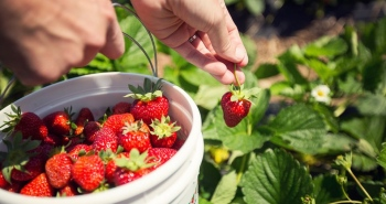 Fruits and Vegetables That You Should Grow In Your Backyard