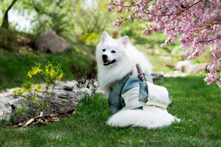 dog garden plants