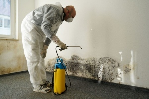 How To Effectively Remove Molds From Your House?