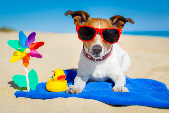 Top Tips for Holidays with your Dog