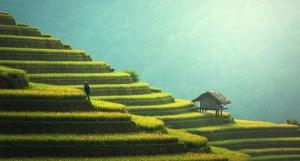 Rice Bali